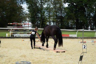 Horse Challenge