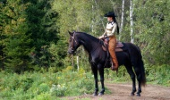 Canadian Horse Western