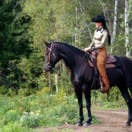 Canadian Horse Western