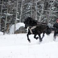 Skijoering mit Canadian Horse