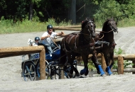 Canadian Horses im Fahrsport