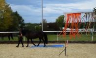 Horseathlon Möhlin