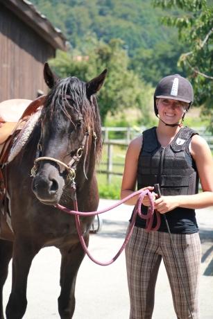 Canadian Horse Wallach