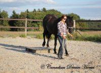 Canadian Dream Horses
